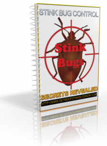 Get-rid-of-stink-bugs-permanently-220x300